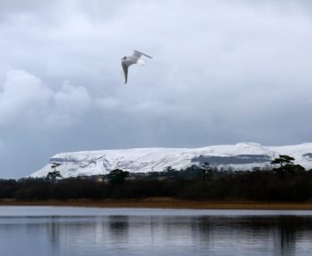 The snow and the seagull