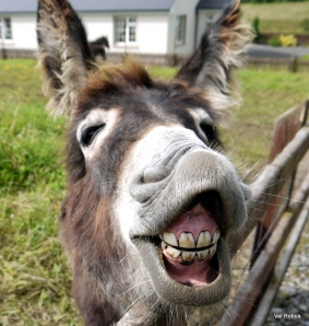 Image result for smiling donkey