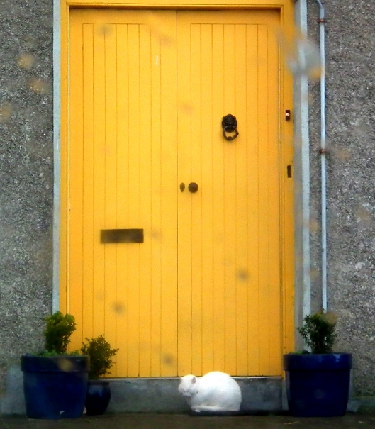 The White Cat and the Yellow Door