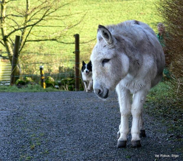 Sathya Sai Donkey