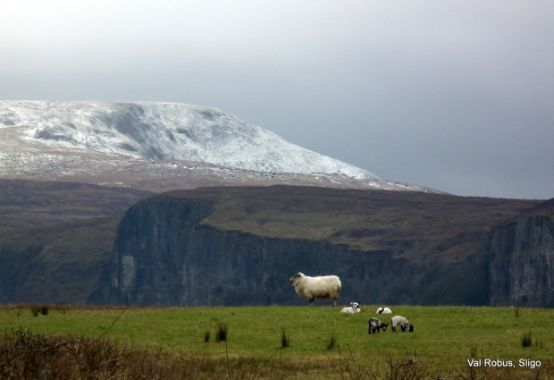 The snow and the sheep