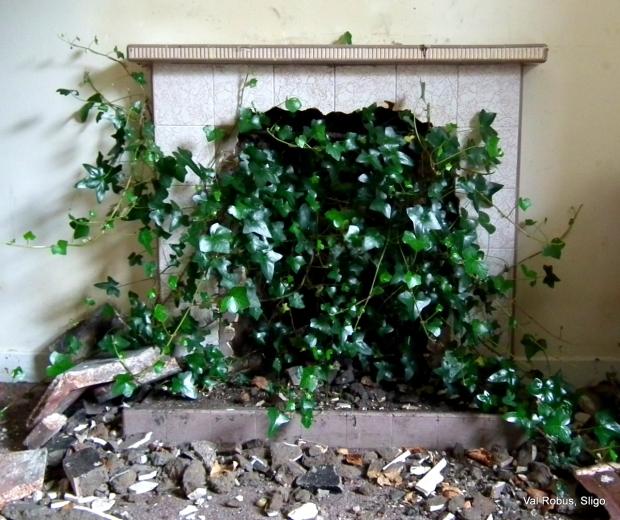 Ivy fire