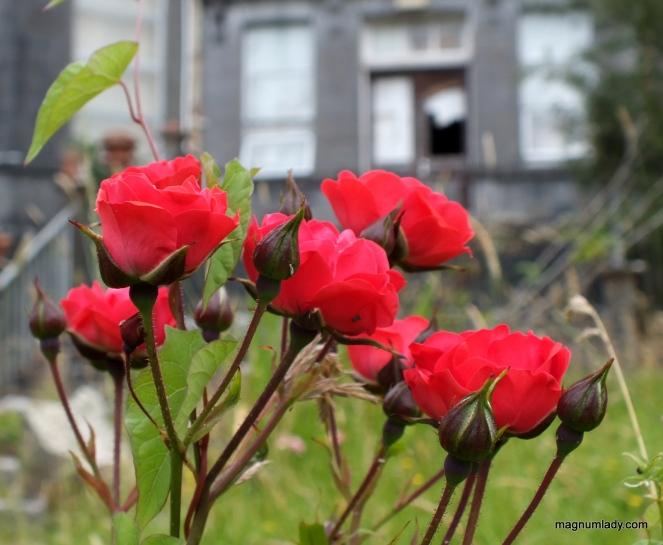 The flowers still bloom