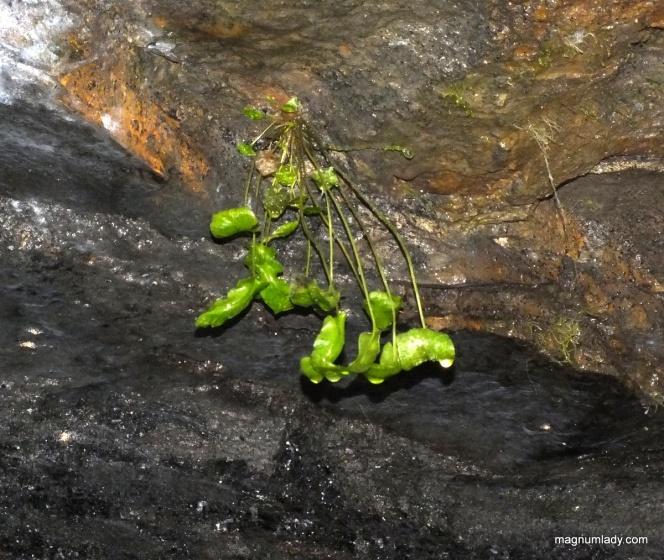 Plant underground