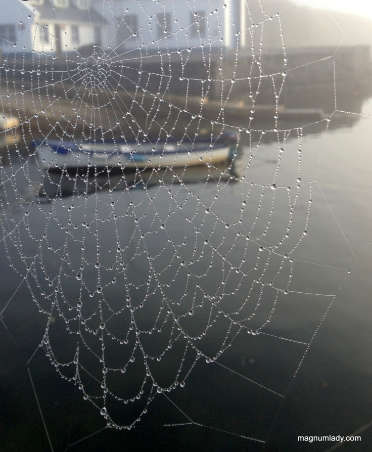 The cobweb and the boat