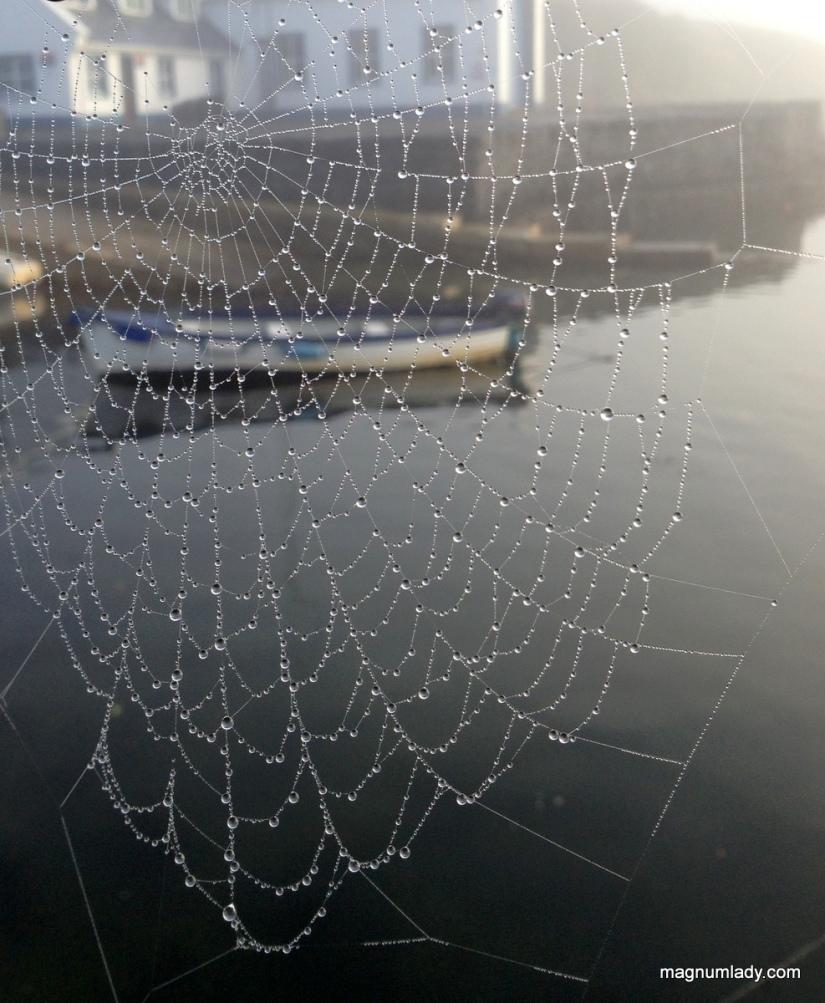 The cobweb and the boat
