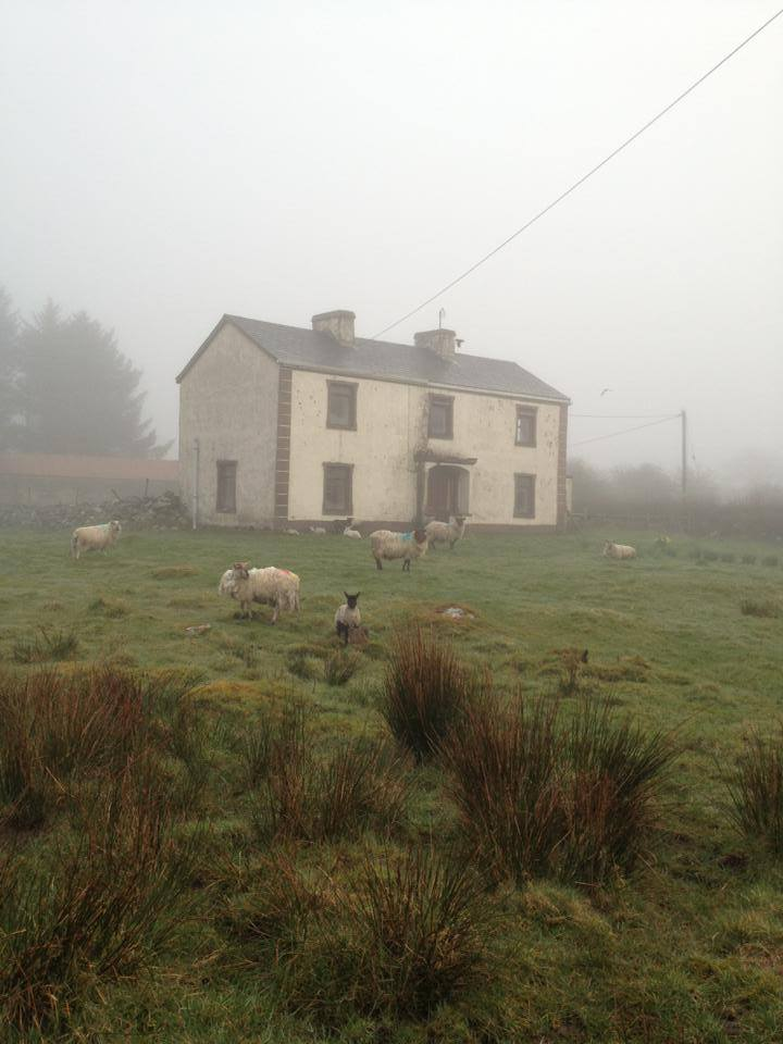 House in the fog with sheep