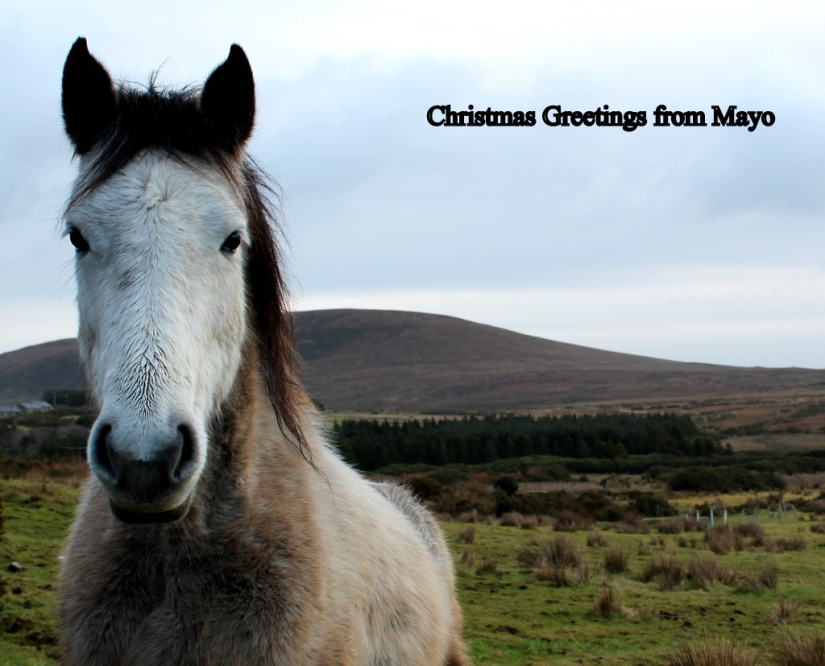 Christmas Greetings from Mayo