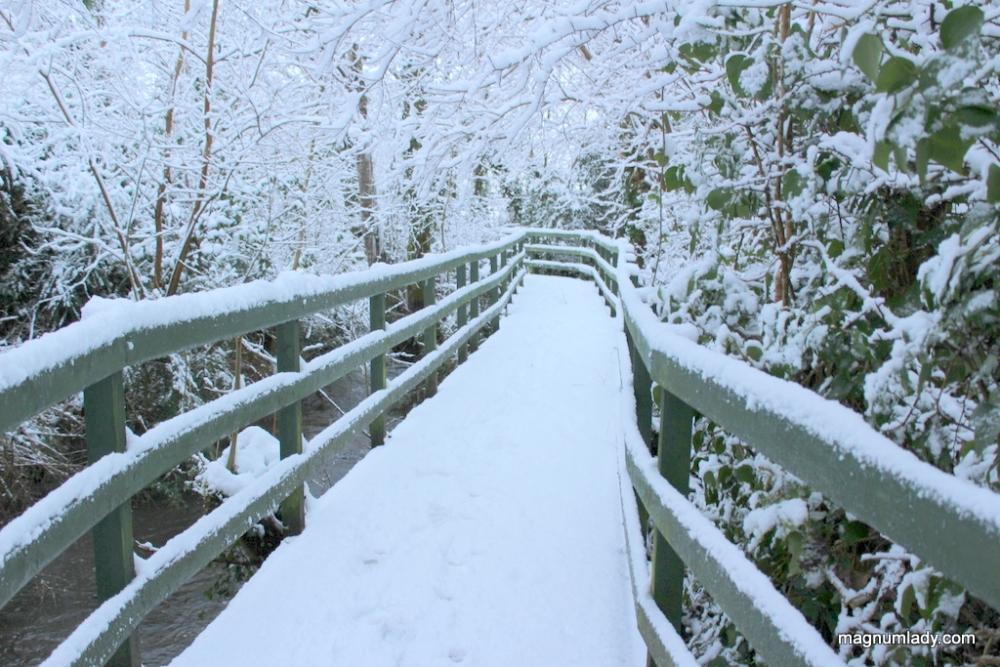 Snow Day (1/5)