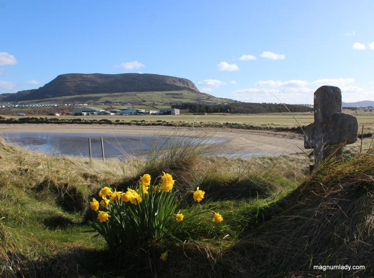 Daffodils and Knocknarea