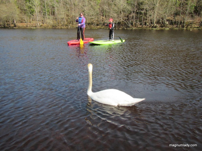 SUPers and the Swan