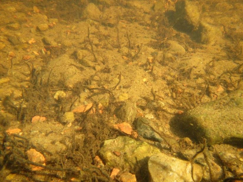 Under Lough Gill