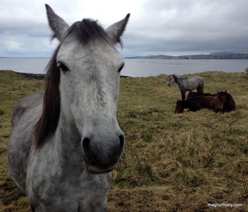 Horse at St. John's Point