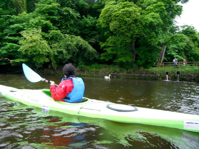 Kayaking alongside Belleek Woods