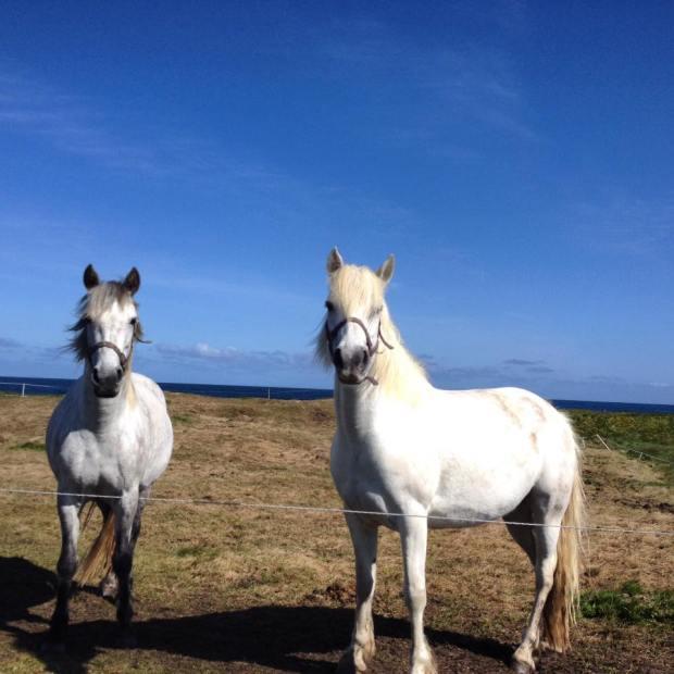 Enniscrone Horses