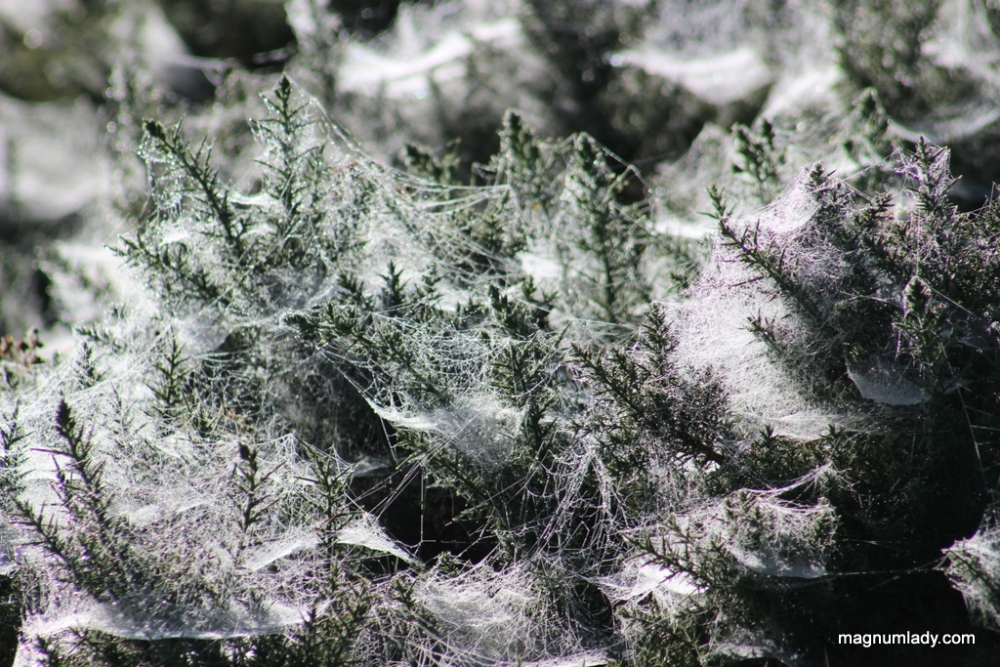 Cobwebs and Clouds (2/6)