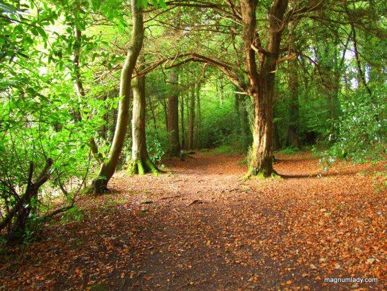 Hazelwood Forest