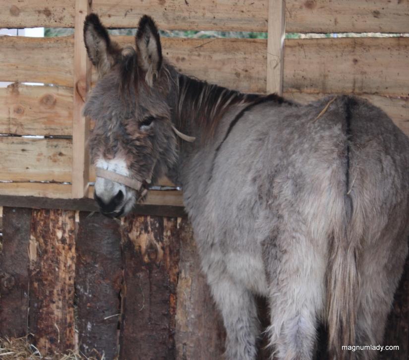 Donkey in the crib