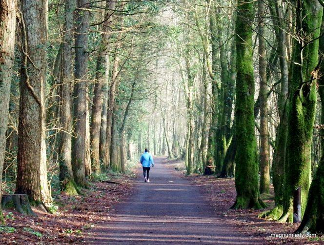 Belleek Woods