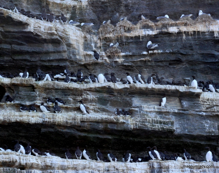 Birds on the sea stack