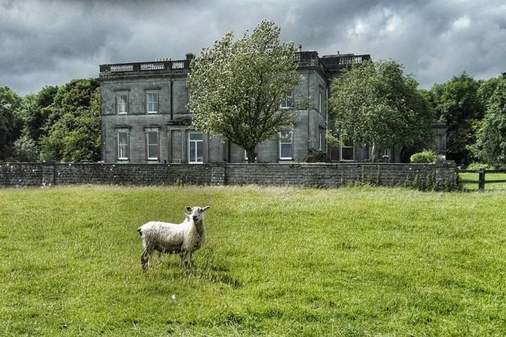 Sheep and Temple House