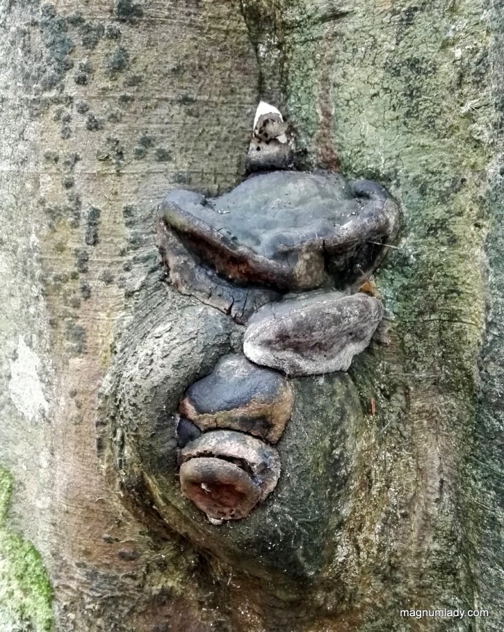A face in a tree