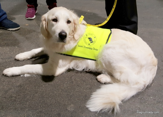 Irish Therapy Dogs