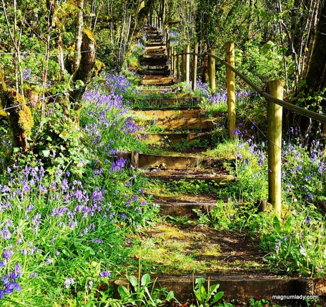 Bluebells flowers stairs