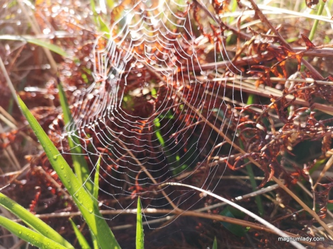 Spider web and ferns