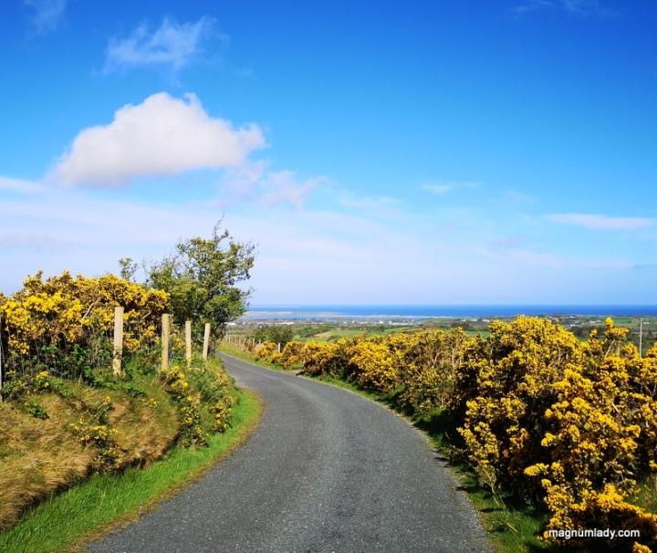 An Irish Lane blue skies yellow flowers