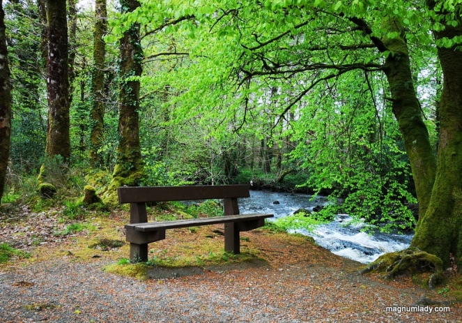 river woods bench