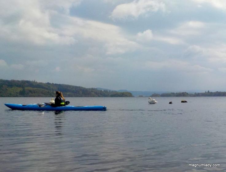 Kayak water swans