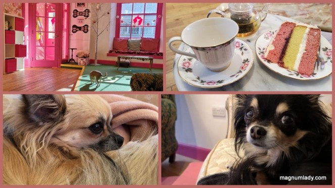 Dog Cafe Chihuahua